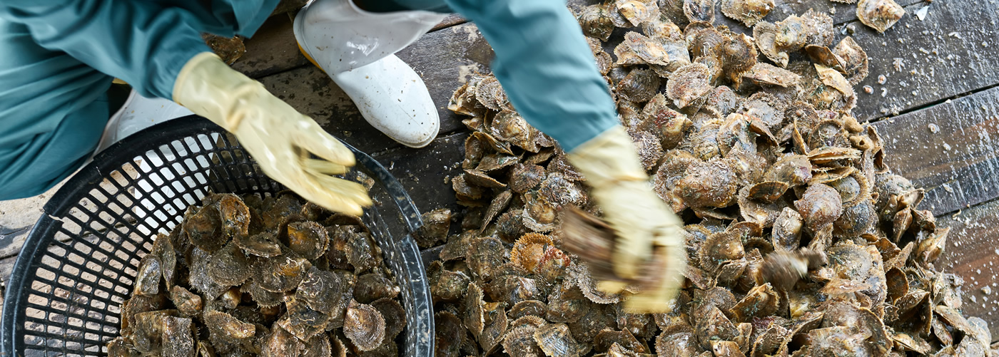 Custom Software for Shellfish Industry